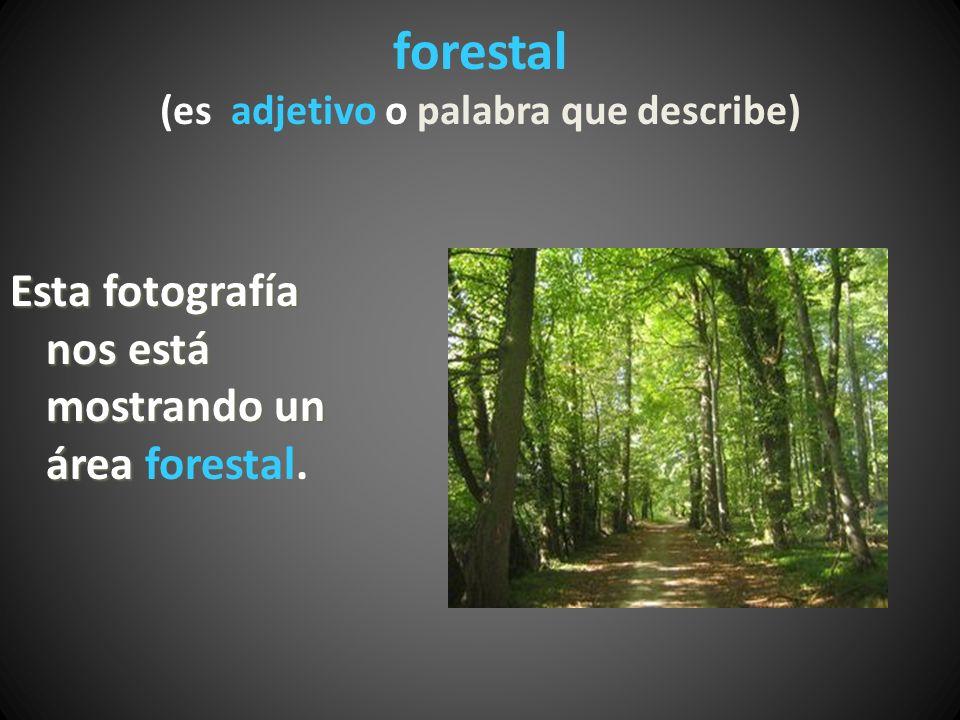 forestal (es adjetivo o palabra que describe) Esta fotografía nos está mostrando un área Esta fotografía nos está mostrando un área forestal.