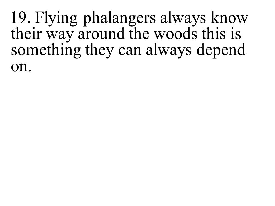 19. Flying phalangers always know their way around the woods this is something they can always depend on.