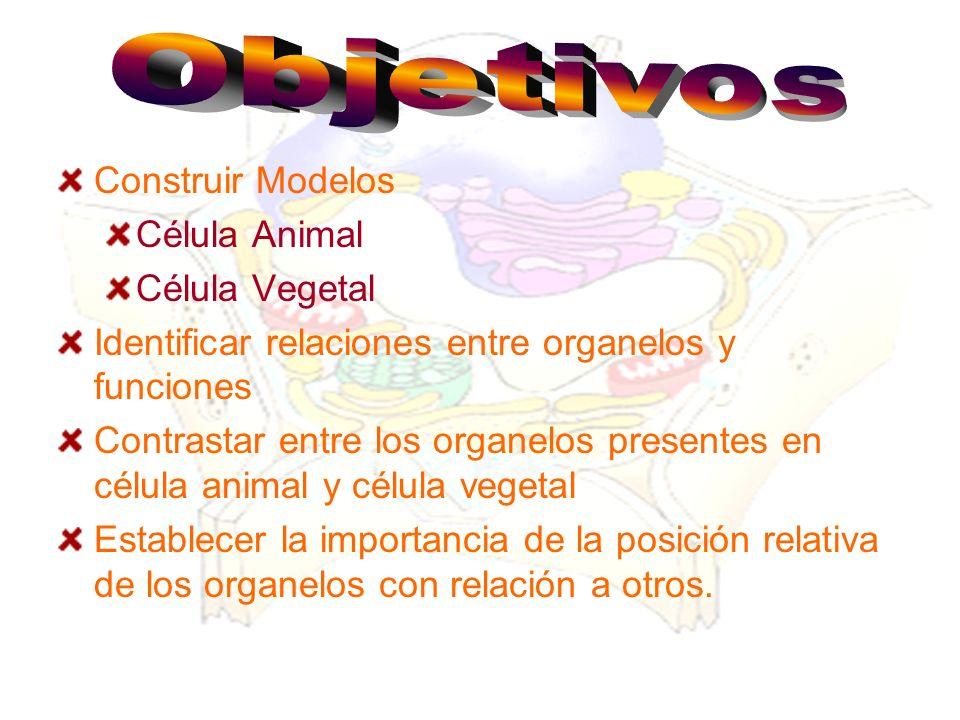 Construir Modelos Célula Animal Célula Vegetal Identificar relaciones entre organelos y funciones Contrastar entre los organelos presentes en célula a