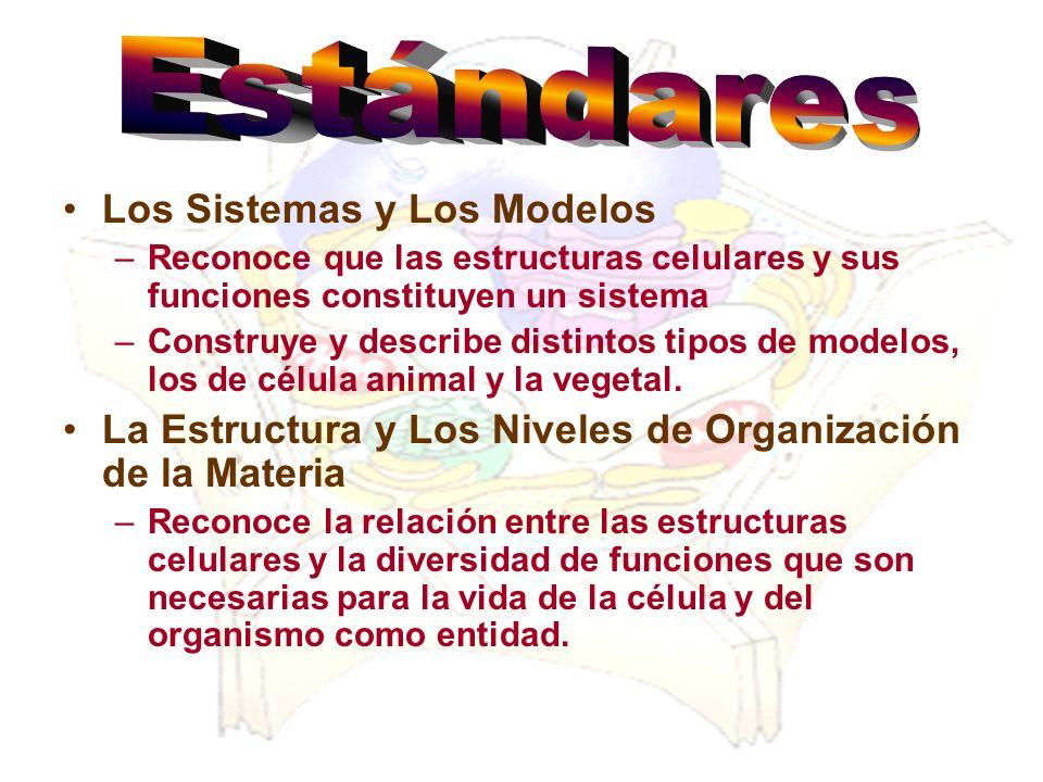 Los Sistemas y Los Modelos –Reconoce que las estructuras celulares y sus funciones constituyen un sistema –Construye y describe distintos tipos de mod