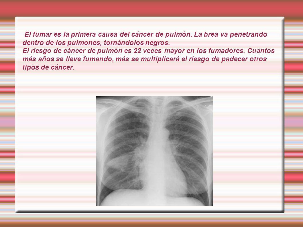 El fumar es la primera causa del cáncer de pulmón. La brea va penetrando dentro de los pulmones, tornándolos negros. El riesgo de cáncer de pulmón es