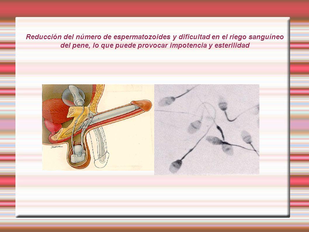 Reducción del número de espermatozoides y dificultad en el riego sanguíneo del pene, lo que puede provocar impotencia y esterilidad