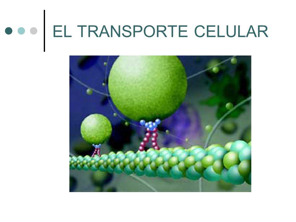 Sumario Historia de la Teoría Celular Estructura y función celular Transporte celular 1.