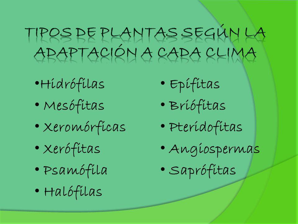 Hidrófilas Mesófitas Xeromórficas Xerófitas Psamófila Halófilas Epífitas Briófitas Pteridofitas Angiospermas Saprófitas