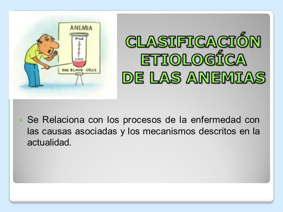 1.- Anemia Secundaria por falta de producción y por falla de la médula ósea, que divide : Anemia Aplásica Aplasia pura de serie roja Mielodiplasia 2.- Anemia secundaria por defecto en la síntesis de DNA, encontramos Anemia megaloblástica 3.- Anemia secundaria por defectos en síntesis de globina encontramos: Talasemia 4.- Anemia secundaria a defecto en la síntesis del hem, encontramos: Anemia por deficiencia de hierro
