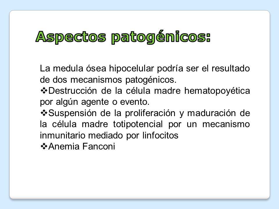 La medula ósea hipocelular podría ser el resultado de dos mecanismos patogénicos. Destrucción de la célula madre hematopoyética por algún agente o eve