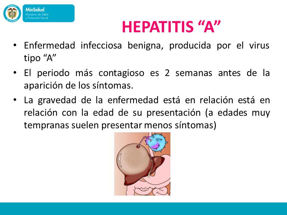 HEPATITIS A Enfermedad infecciosa benigna, producida por el virus tipo A El periodo más contagioso es 2 semanas antes de la aparición de los síntomas.
