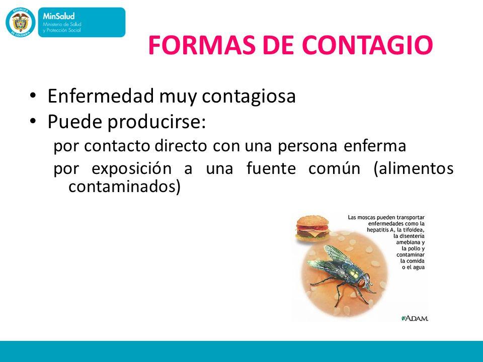 FORMAS DE CONTAGIO Enfermedad muy contagiosa Puede producirse: por contacto directo con una persona enferma por exposición a una fuente común (aliment