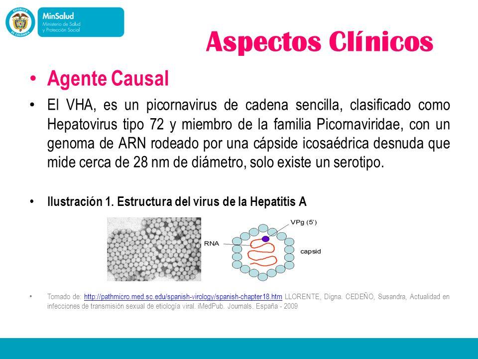 Aspectos Clínicos Agente Causal El VHA, es un picornavirus de cadena sencilla, clasificado como Hepatovirus tipo 72 y miembro de la familia Picornavir