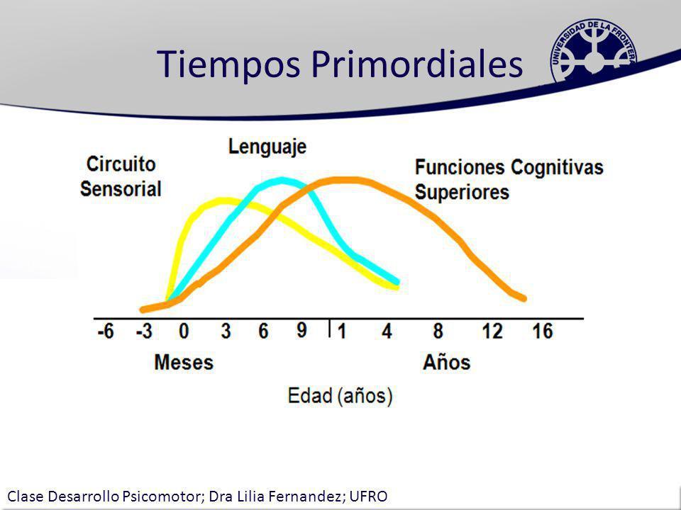 Tiempos Primordiales Períodos Críticos: Control emocional, de 0 a 2 años Visión, de 0 a 2 años Apego social, de 0 a 2 años Vocabulario, de 0 a 3 años Segundo idioma, de 0 a 10 años Matemáticas- lógica, de 1 a 4 años Música, de 3 a 10 años Desarrollo de las habilidades de la comunicación y el lenguaje 0 a 7 años Begley, 1996 Clase Desarrollo Psicomotor; Dra Lilia Fernandez; UFRO