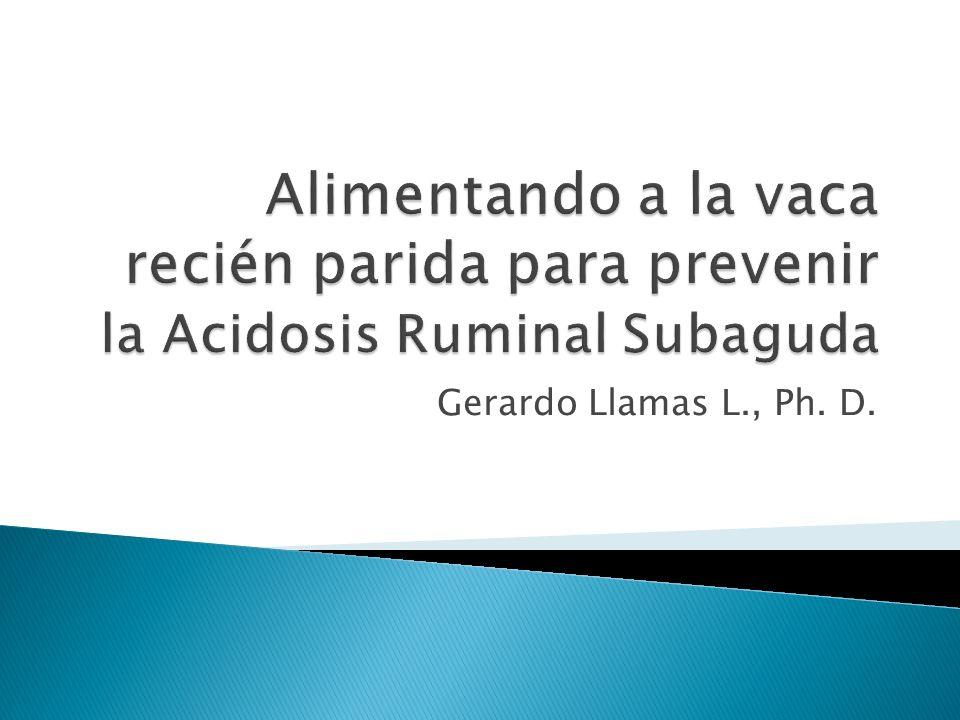 Gerardo Llamas L., Ph. D.