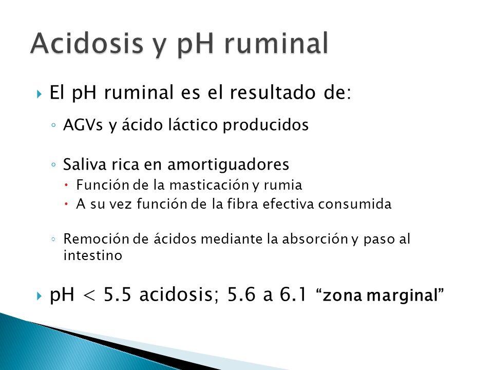 El pH ruminal es el resultado de: AGVs y ácido láctico producidos Saliva rica en amortiguadores Función de la masticación y rumia A su vez función de