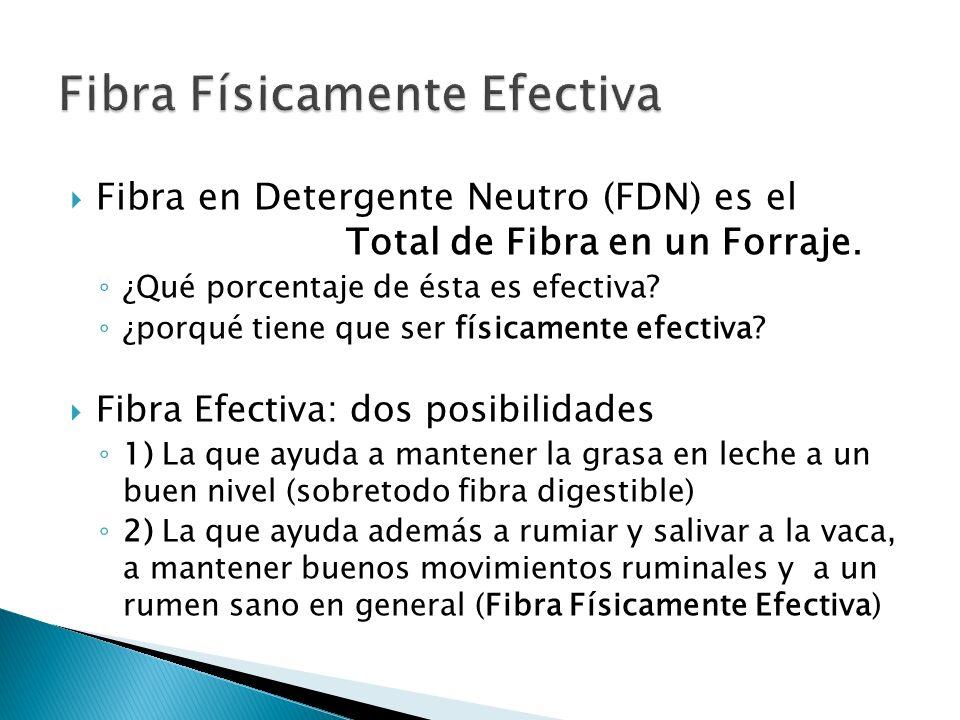 Fibra en Detergente Neutro (FDN) es el Total de Fibra en un Forraje. ¿Qué porcentaje de ésta es efectiva? ¿porqué tiene que ser físicamente efectiva?