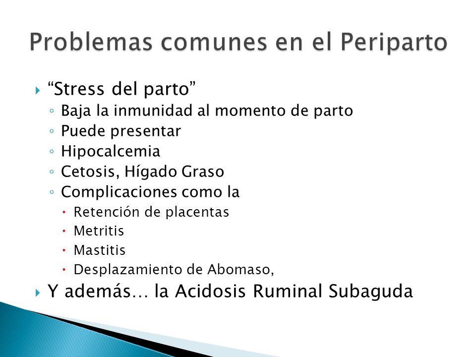 Stress del parto Baja la inmunidad al momento de parto Puede presentar Hipocalcemia Cetosis, Hígado Graso Complicaciones como la Retención de placenta