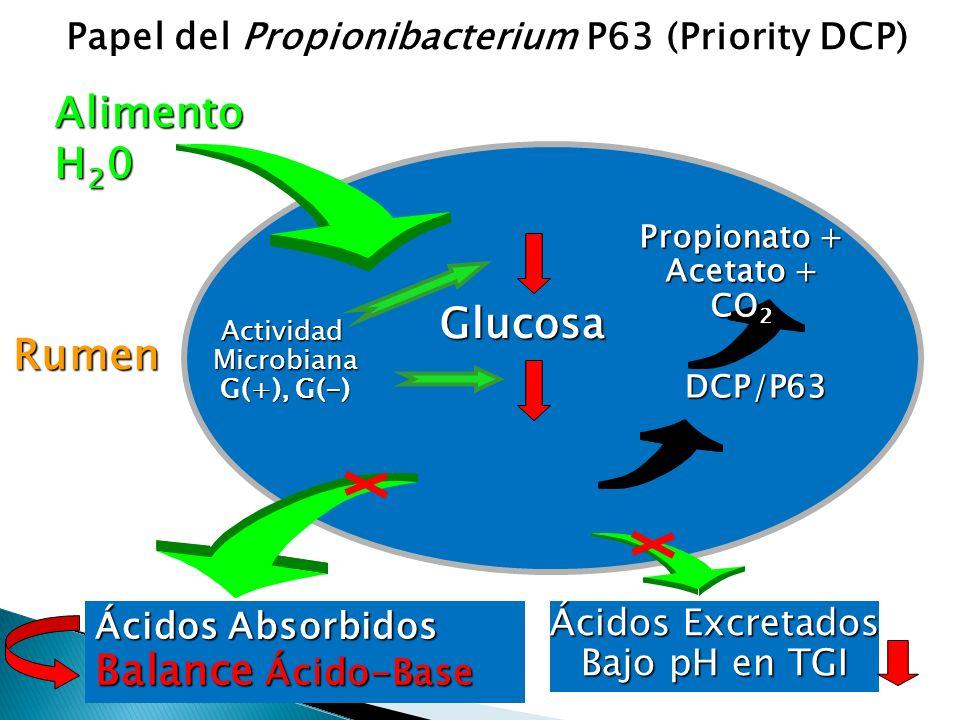 Papel del Propionibacterium P63 (Priority DCP) Alimento H 2 0 Rumen LactatootrosAGV Almidón Ácidos Absorbidos Balance Ácido-Base Glucosa Ácidos Excret
