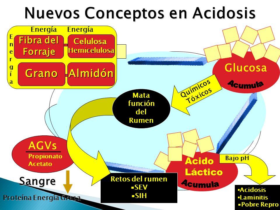 Nuevos Conceptos en Acidosis Sangre Proteína Energía Grasa Glucosa Químicos Tóxicos Ácido Láctico Acidosis Laminitis Pobre Repro Bajo pH Retos del rum