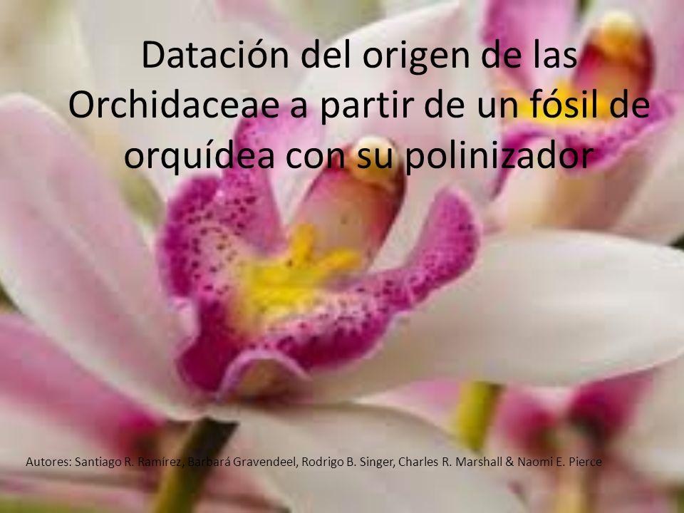 Datación del origen de las Orchidaceae a partir de un fósil de orquídea con su polinizador Autores: Santiago R. Ramírez, Barbará Gravendeel, Rodrigo B