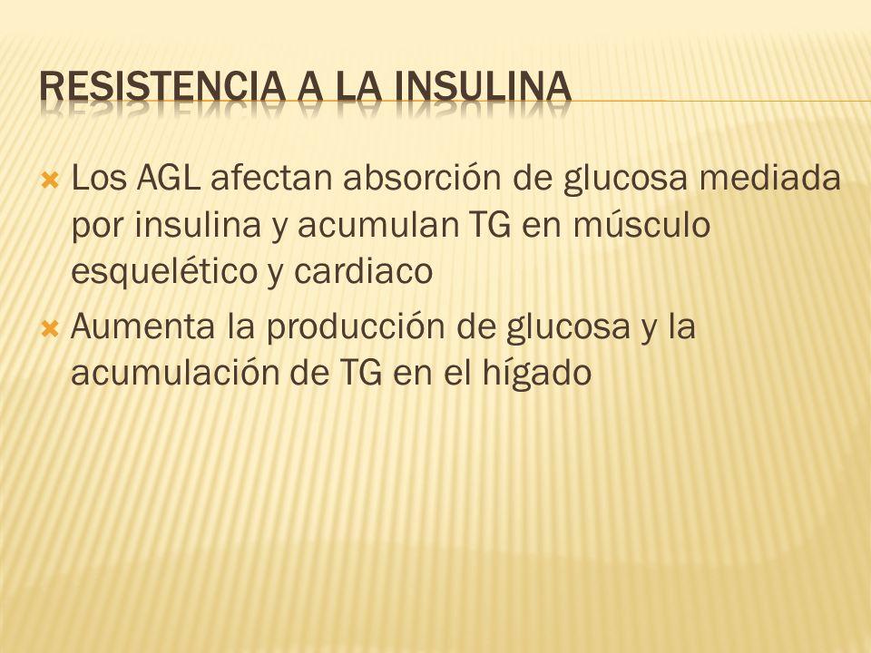 Los AGL afectan absorción de glucosa mediada por insulina y acumulan TG en músculo esquelético y cardiaco Aumenta la producción de glucosa y la acumul