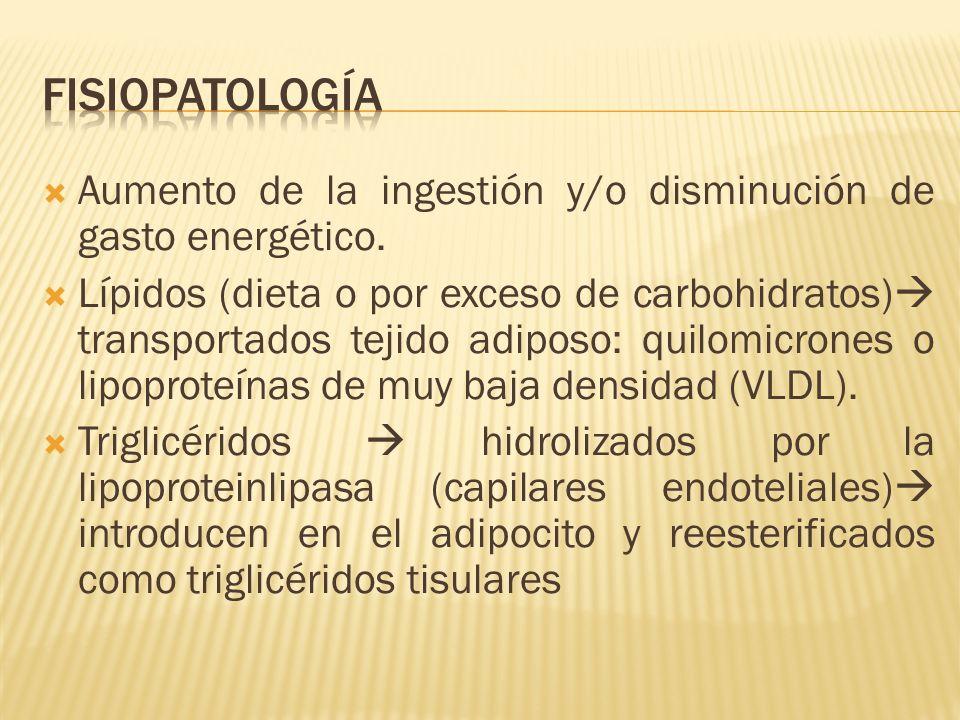 Aumento de la ingestión y/o disminución de gasto energético. Lípidos (dieta o por exceso de carbohidratos) transportados tejido adiposo: quilomicrones