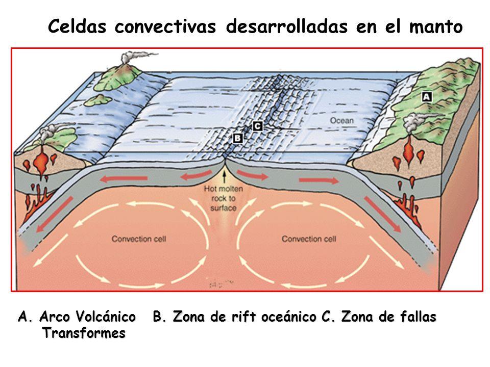 Celdas convectivas desarrolladas en el manto A. Arco Volcánico B. Zona de rift oceánico C. Zona de fallas Transformes