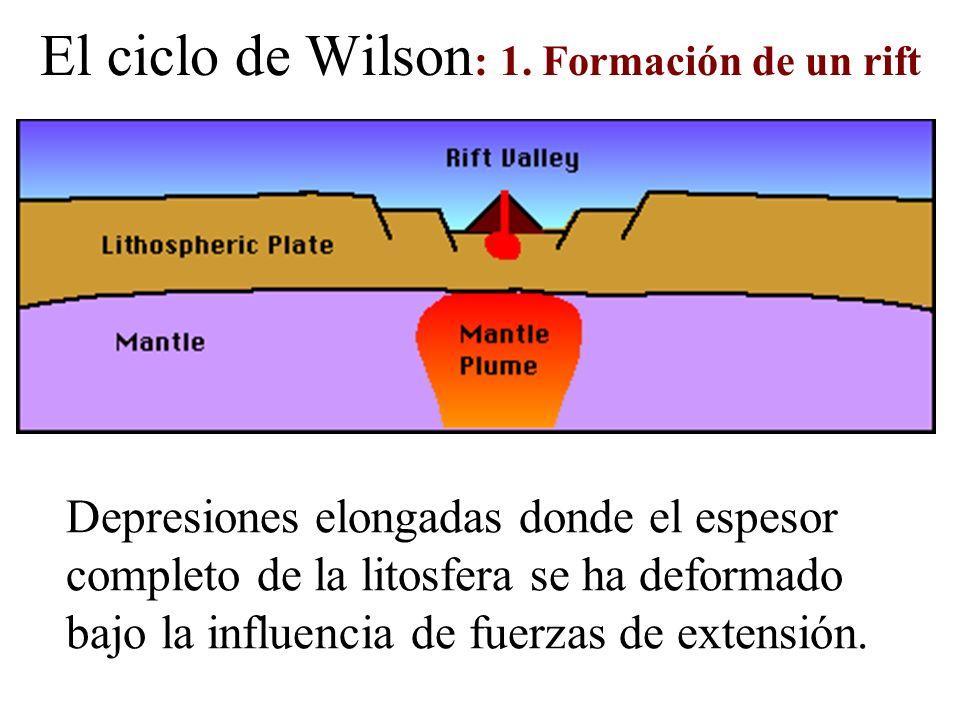 El ciclo de Wilson : 1. Formación de un rift Depresiones elongadas donde el espesor completo de la litosfera se ha deformado bajo la influencia de fue