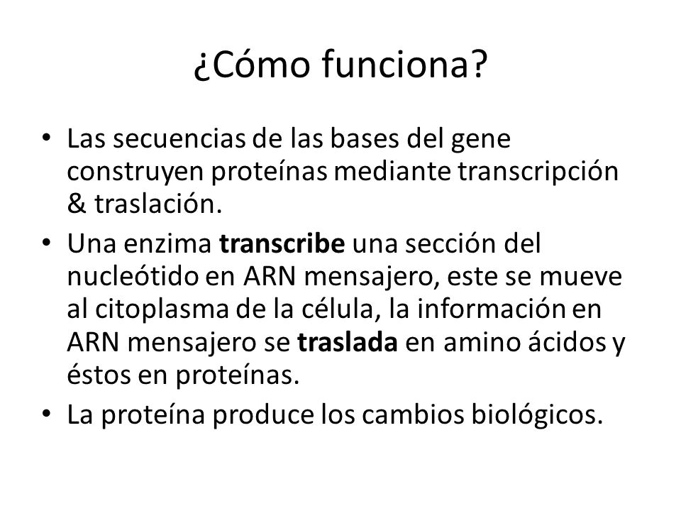 ¿Cómo funciona? Las secuencias de las bases del gene construyen proteínas mediante transcripción & traslación. Una enzima transcribe una sección del n