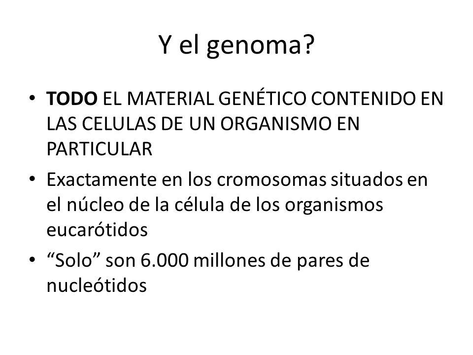 Y el genoma? TODO EL MATERIAL GENÉTICO CONTENIDO EN LAS CELULAS DE UN ORGANISMO EN PARTICULAR Exactamente en los cromosomas situados en el núcleo de l