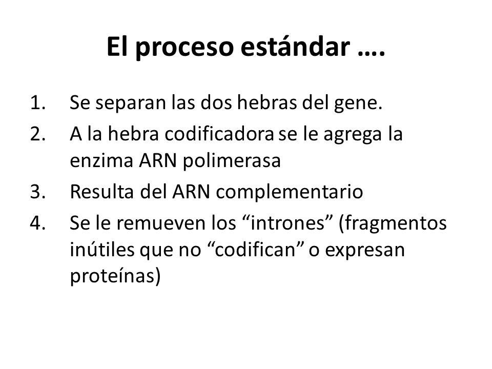 El proceso estándar …. 1.Se separan las dos hebras del gene. 2.A la hebra codificadora se le agrega la enzima ARN polimerasa 3.Resulta del ARN complem