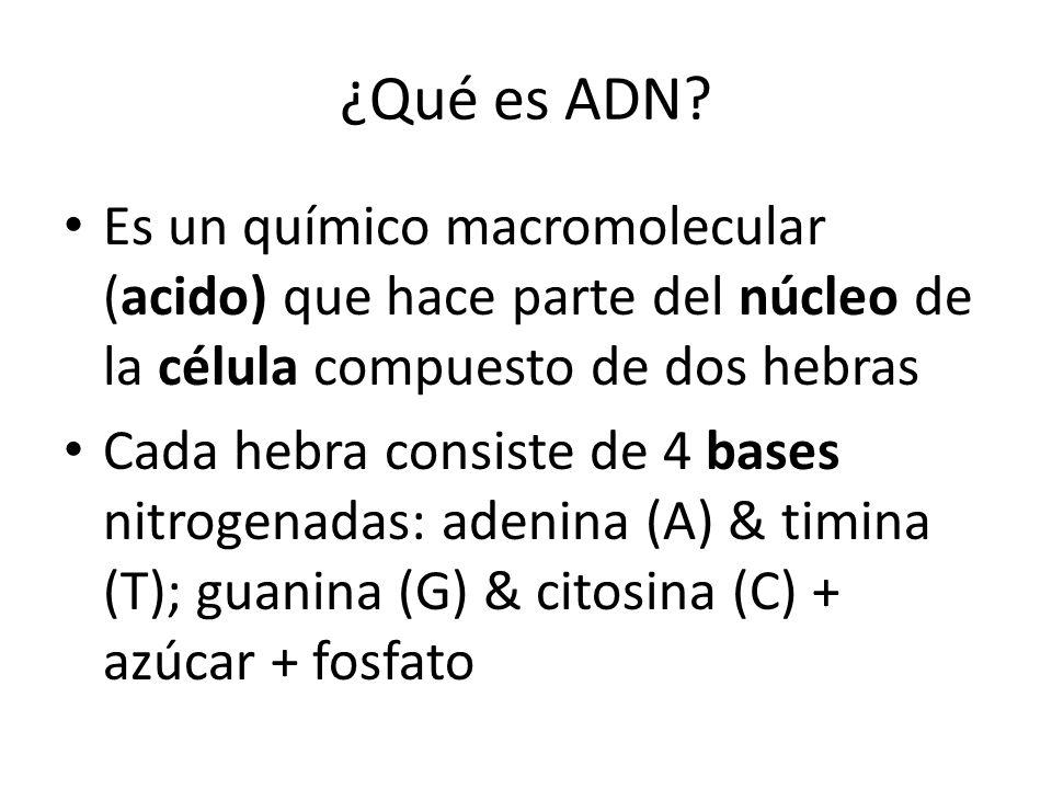 ¿Qué es ADN? Es un químico macromolecular (acido) que hace parte del núcleo de la célula compuesto de dos hebras Cada hebra consiste de 4 bases nitrog