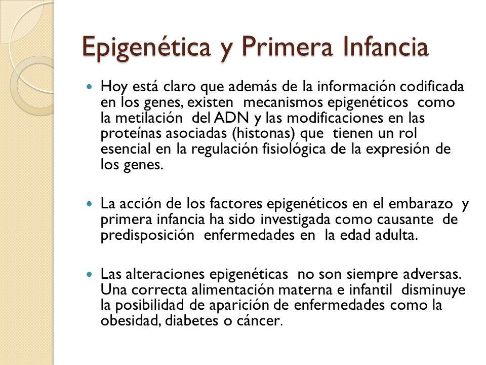 Epigenética y Primera Infancia Hoy está claro que además de la información codificada en los genes, existen mecanismos epigenéticos como la metilación