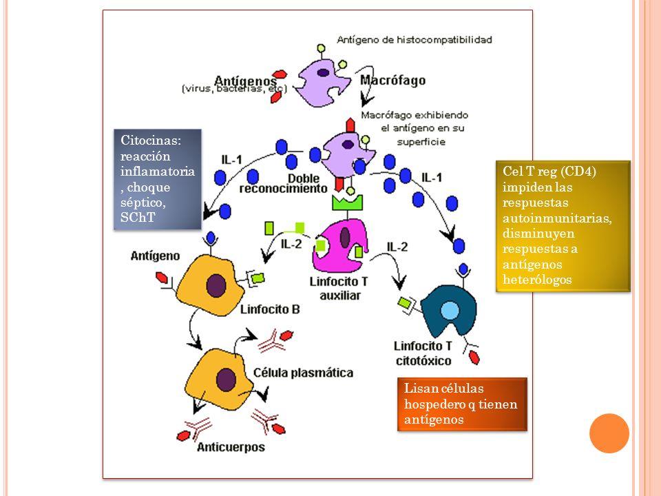Lisan células hospedero q tienen antígenos Citocinas: reacción inflamatoria, choque séptico, SChT Cel T reg (CD4) impiden las respuestas autoinmunitar