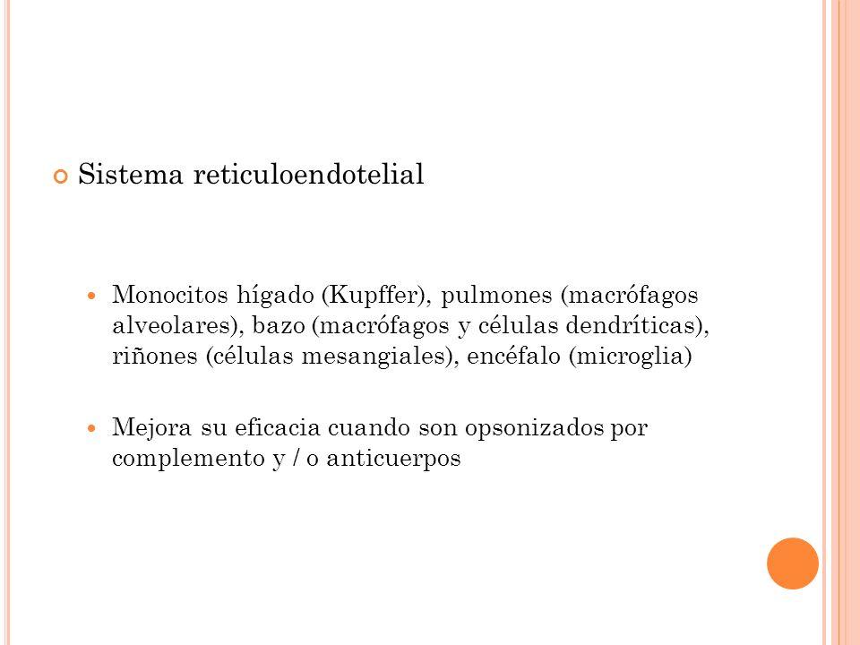 Sistema reticuloendotelial Monocitos hígado (Kupffer), pulmones (macrófagos alveolares), bazo (macrófagos y células dendríticas), riñones (células mes