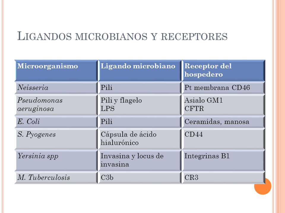 L IGANDOS MICROBIANOS Y RECEPTORES MicroorganismoLigando microbianoReceptor del hospedero Neisseria PiliPt membrana CD46 Pseudomonas aeruginosa Pili y