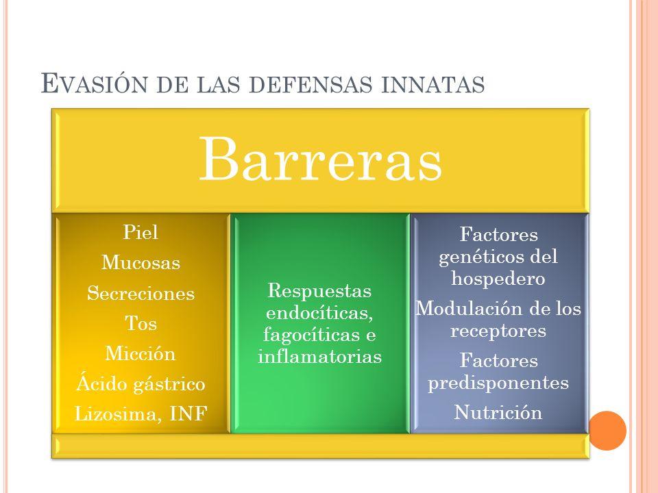 E VASIÓN DE LAS DEFENSAS INNATAS Barreras Piel Mucosas Secreciones Tos Micción Ácido gástrico Lizosima, INF Respuestas endocíticas, fagocíticas e infl