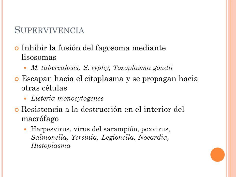 S UPERVIVENCIA Inhibir la fusión del fagosoma mediante lisosomas M. tuberculosis, S. typhy, Toxoplasma gondii Escapan hacia el citoplasma y se propaga