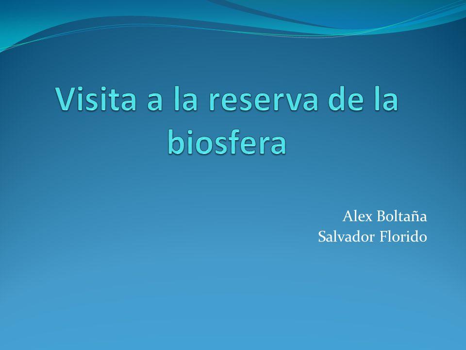 Alex Boltaña Salvador Florido