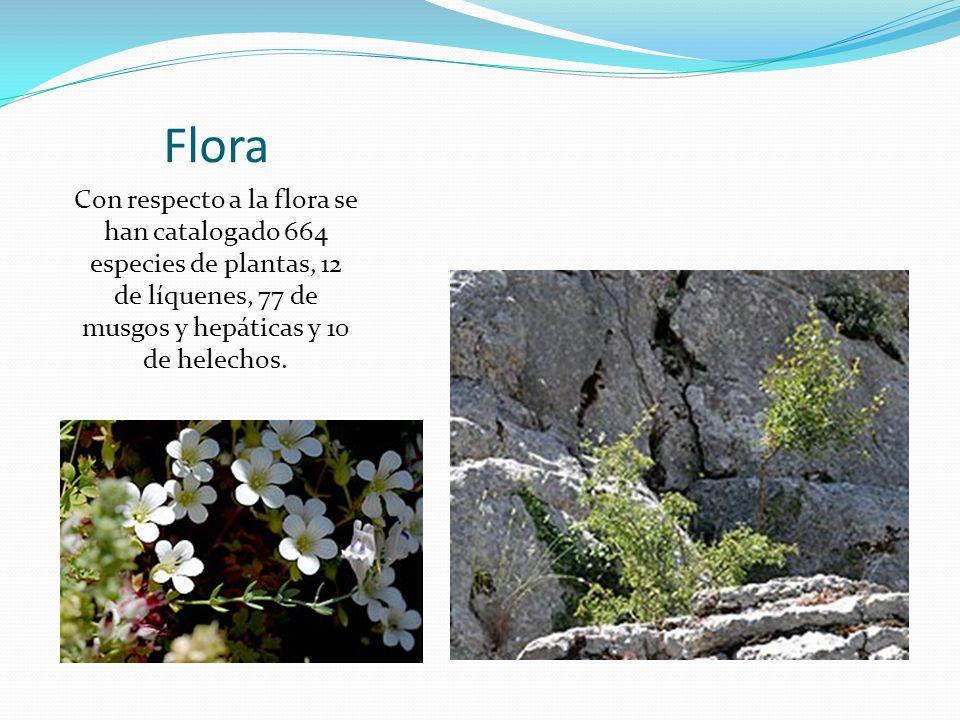 Flora Con respecto a la flora se han catalogado 664 especies de plantas, 12 de líquenes, 77 de musgos y hepáticas y 10 de helechos.