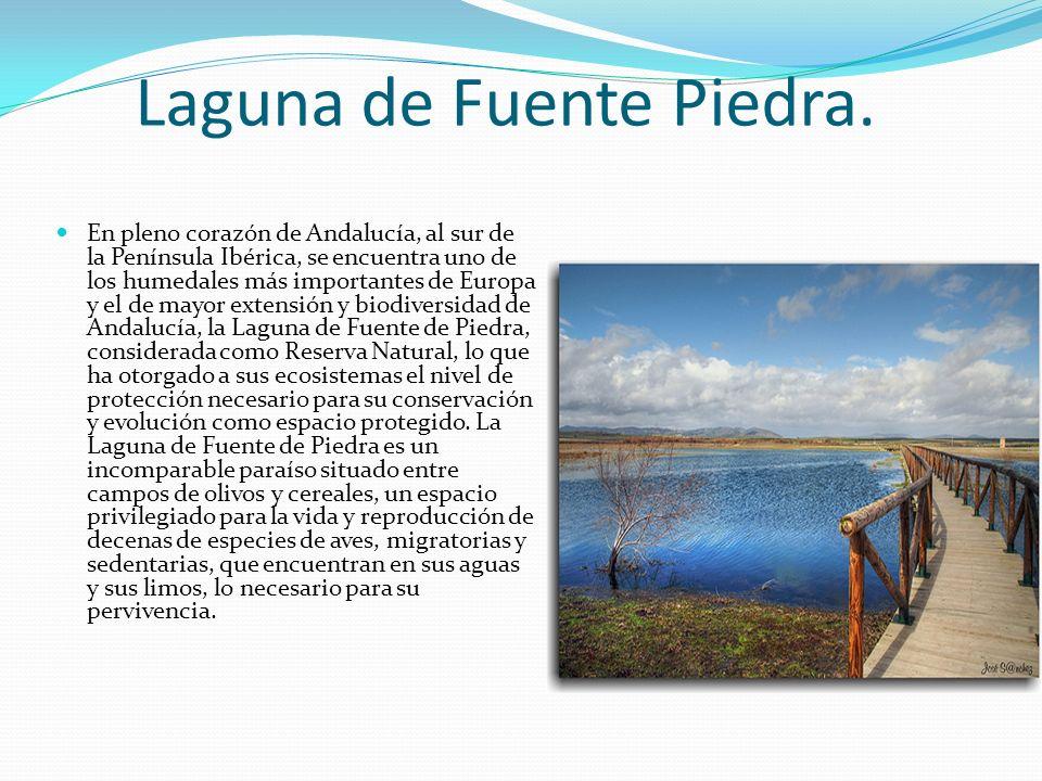 Laguna de Fuente Piedra.