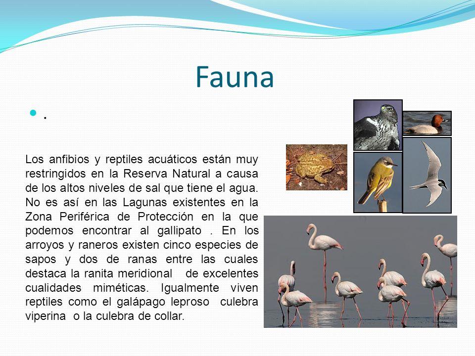 Fauna.