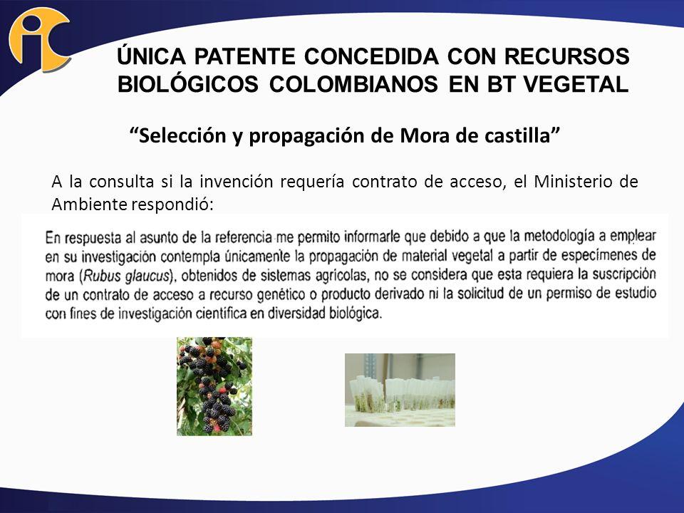 ÚNICA PATENTE CONCEDIDA CON RECURSOS BIOLÓGICOS COLOMBIANOS EN BT VEGETAL Selección y propagación de Mora de castilla A la consulta si la invención re