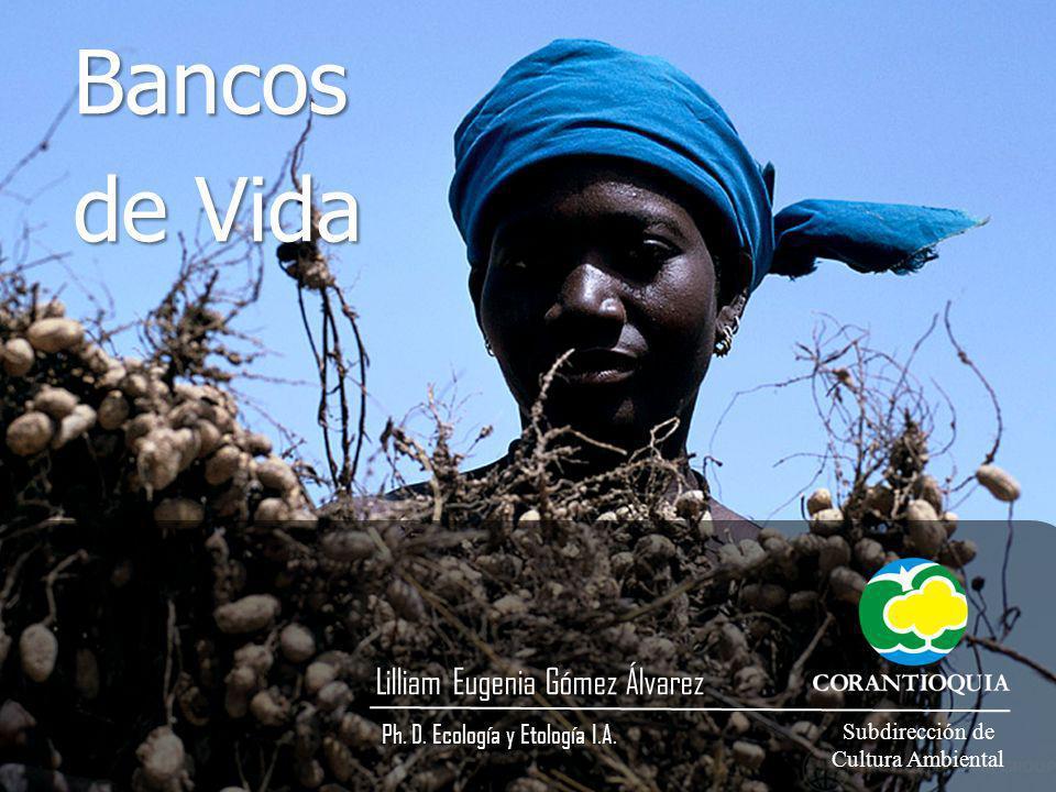Bancos de Vida Lilliam Eugenia Gómez Álvarez Ph. D. Ecología y Etología I.A. Ph. D. Ecología y Etología I.A. Subdirección de Cultura Ambiental