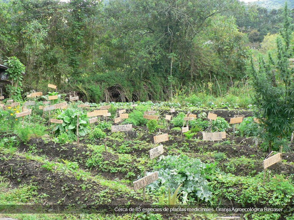 Cerca de 85 especies de plantas medicinales. Granja Agroecológica Renaser Cerca de 85 especies de plantas medicinales. Granja Agroecológica Renaser