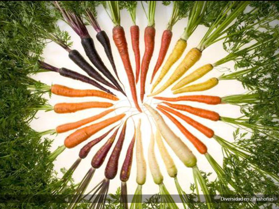Diversidad en zanahorias Diversidad en zanahorias