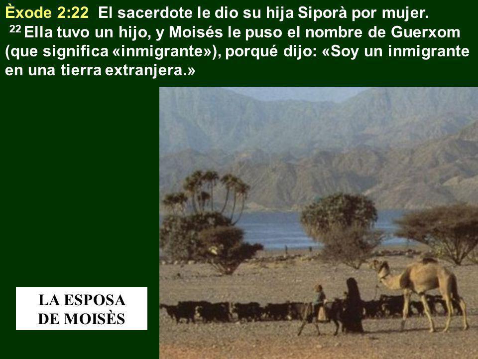 Èxode 2:22 El sacerdote le dio su hija Siporà por mujer. 22 Ella tuvo un hijo, y Moisés le puso el nombre de Guerxom (que significa «inmigrante»), por