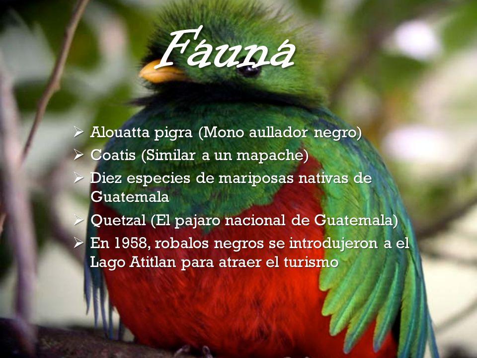 Fauna Alouatta pigra (Mono aullador negro) Alouatta pigra (Mono aullador negro) Coatis (Similar a un mapache) Coatis (Similar a un mapache) Diez espec
