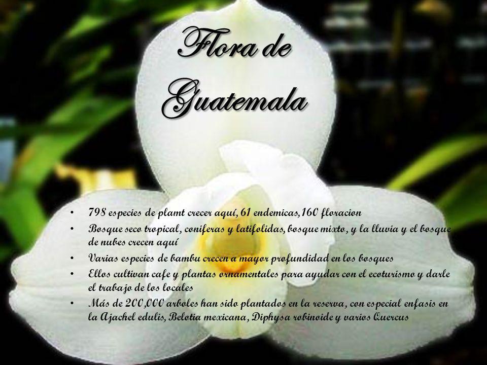 Flora de Guatemala 798 especies de plamt crecer aquí, 61 endemicas, 160 floracion Bosque seco tropical, coniferas y latifolidas, bosque mixto, y la ll