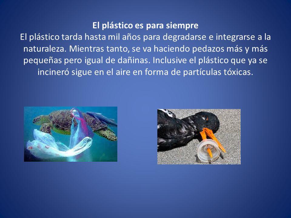 El plástico es para siempre El plástico tarda hasta mil años para degradarse e integrarse a la naturaleza. Mientras tanto, se va haciendo pedazos más