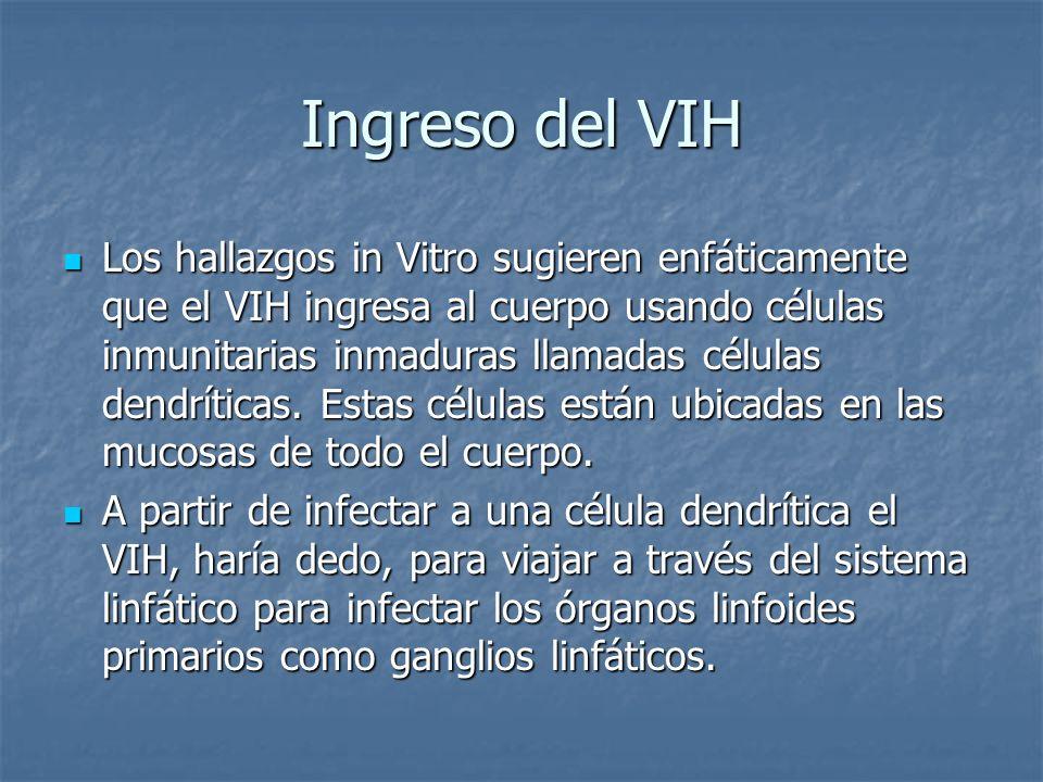 Ingreso del VIH Los hallazgos in Vitro sugieren enfáticamente que el VIH ingresa al cuerpo usando células inmunitarias inmaduras llamadas células dendríticas.