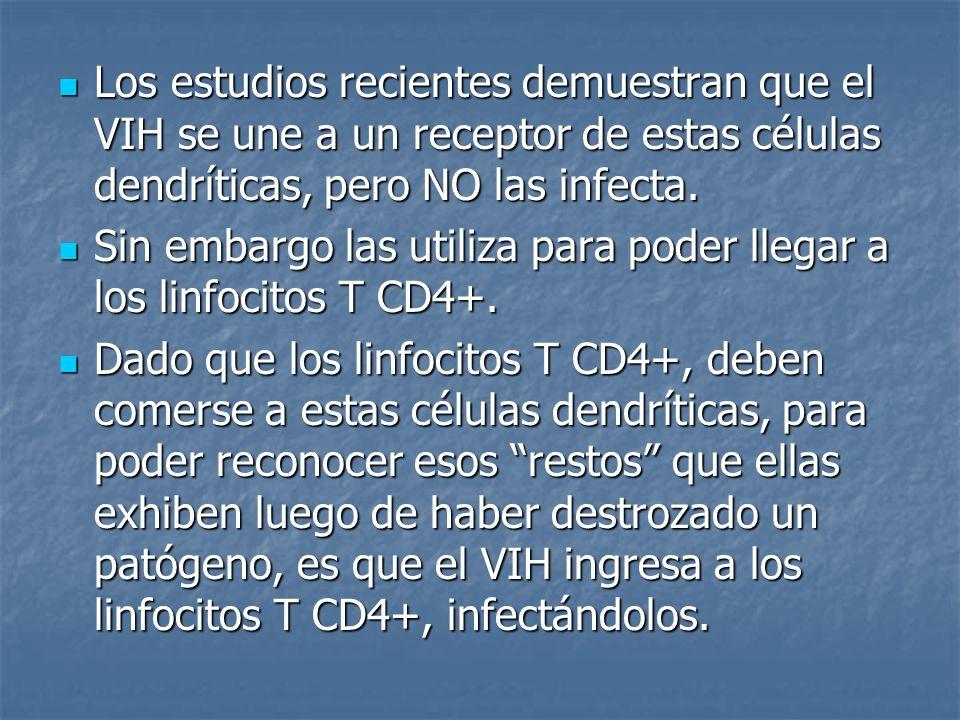 Estos linfocitos T CD4+ (infectados) en su afán de destruir al patógeno por completo, lo llevan a un ganglio linfático.