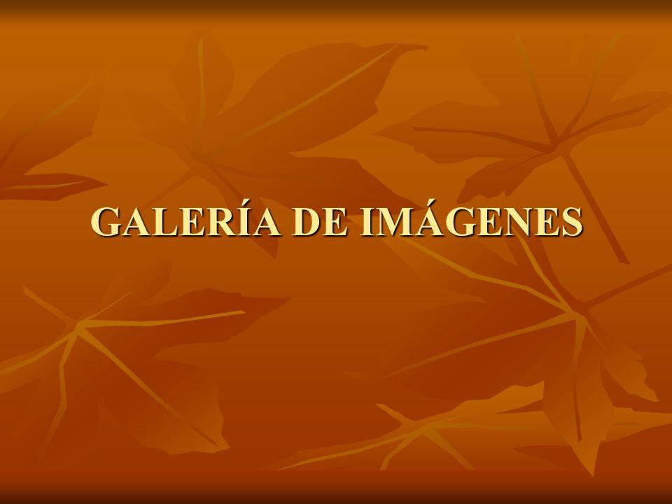 GALERÍA DE IMÁGENES